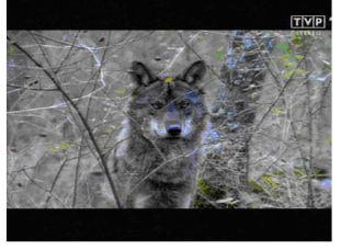 tuner winfast, obraz z tunera TV